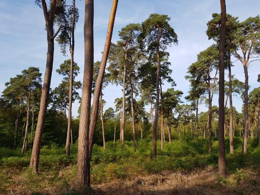 Forêt domaniale de Compiègne - Jonathan Lenoir