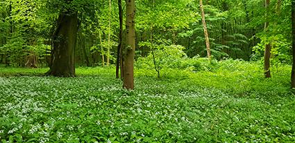 Banalisation de la biodiversité dans les sous-bois européens : les pluies acides en cause
