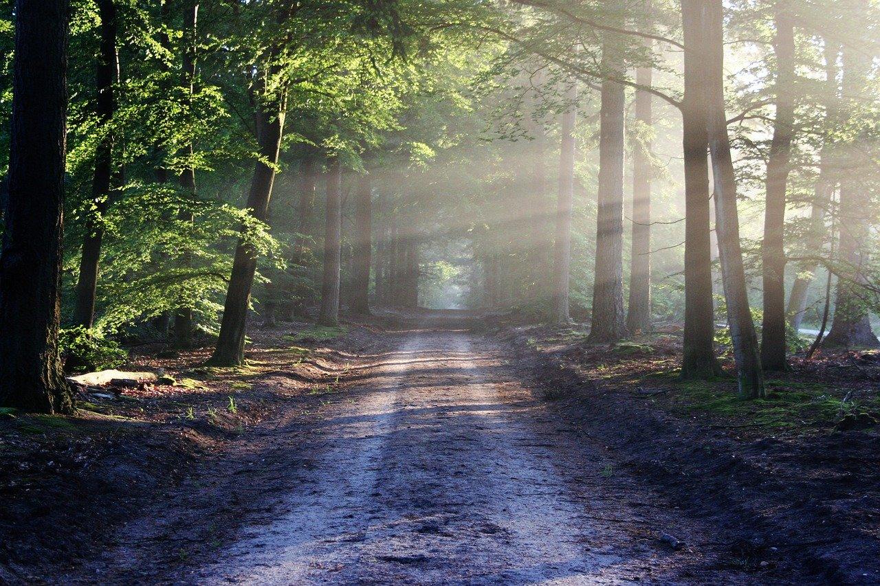 Les chercheurs d'EDYSAN travaillent en forêt pour faire des relevés et tester leurs théories