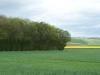 smallforest_fieldwork1