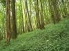 smallforest_fieldwork10