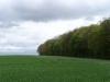 smallforest_fieldwork2