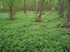 smallforest_fieldwork4