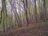 smallforest_fieldwork6