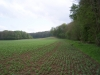 smallforest_fieldwork8