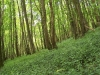 smallforest_fieldwork9